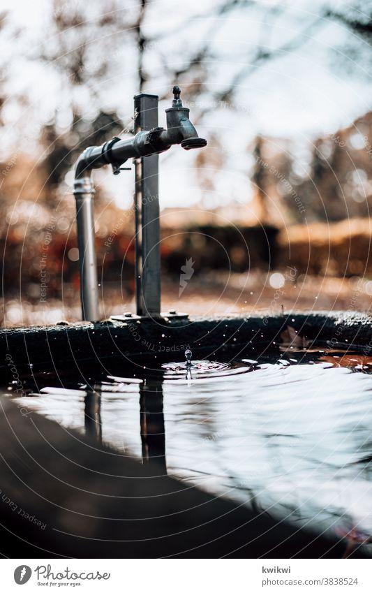 tropfender Brunnen Wasserhahn Friedhof Wassertropfen nass Tropfen Nahaufnahme feucht Reflexion & Spiegelung Natur Pflanze Detailaufnahme Unschärfe Außenaufnahme