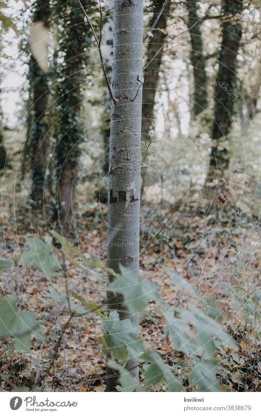 LOL Baum Natur Blatt Herbst Wald Außenaufnahme Farbfoto Pflanze Umwelt Menschenleer natürlich Landschaft Tag braun grün Baumstamm Ast Gedeckte Farben Sträucher