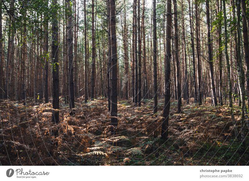 Bäume im Wald Baum Natur Landschaft Außenaufnahme Menschenleer Umwelt Herbst Tag Sonnenlicht Baumstamm Holz Pflanze Farbfoto grün braun Licht Schatten Ruhe