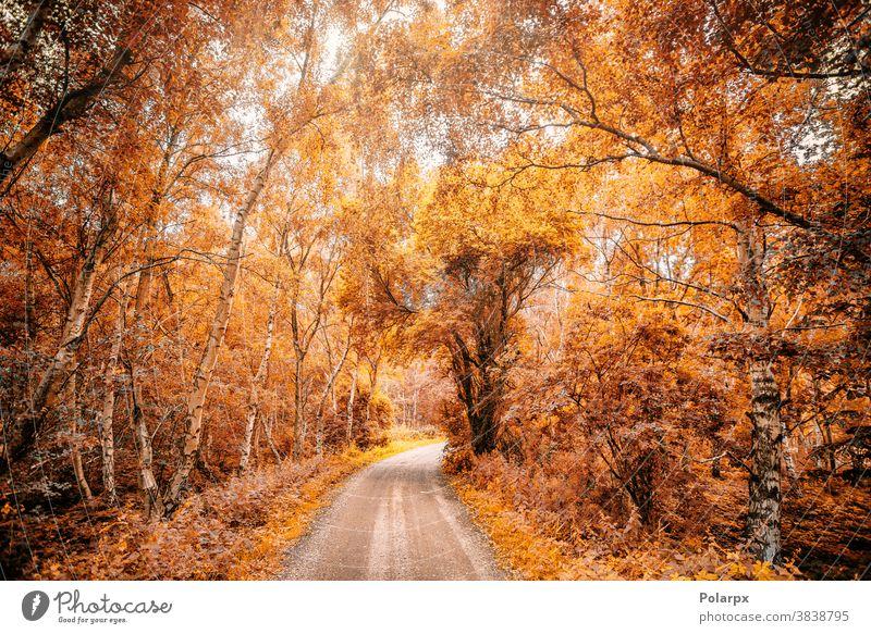 Waldweg in einem Wald im Herbst Sonnenlicht Tag Wasser Design November Waldgebiet Balken Herbstwald gold Ahorn pulsierend Weg im Freien ländlich malerisch