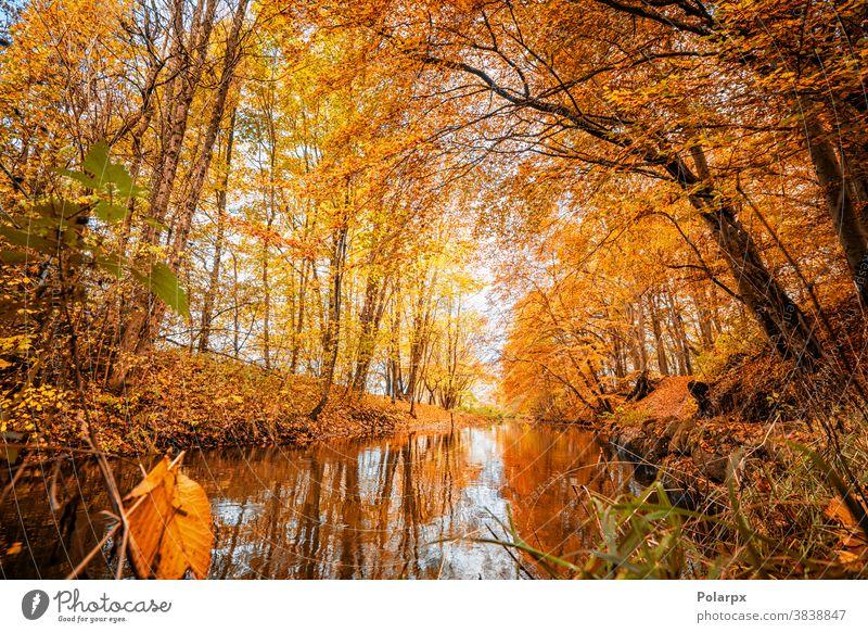 Farbenfrohe Herbstfarben im Wald friedlich Tourismus Ast fließend Berge Oktober Waldgebiet ländlich golden Reflexion & Spiegelung Pflanze Schönheit