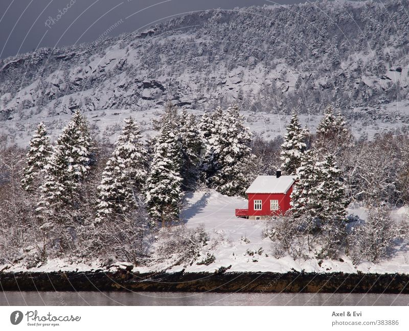Einsames Häuschen Sonne Baum rot Einsamkeit Landschaft Winter Haus Wald Berge u. Gebirge Schnee Küste hell Idylle Schönes Wetter abgelegen Norwegen