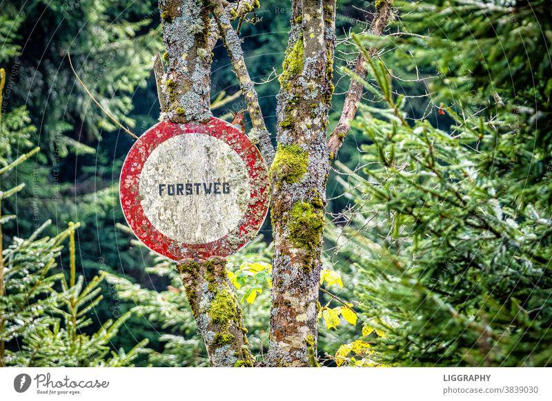 Forstweg fahrverbot Wald Fahrrad Baum Ausflug Fahrradfahren Natur Außenaufnahme Freizeit & Hobby Bewegung unterwegs Wege & Pfade Sommer sportlich Tag Umwelt