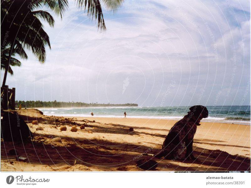 Hundeblick Meer Strand Hund Sand Palme