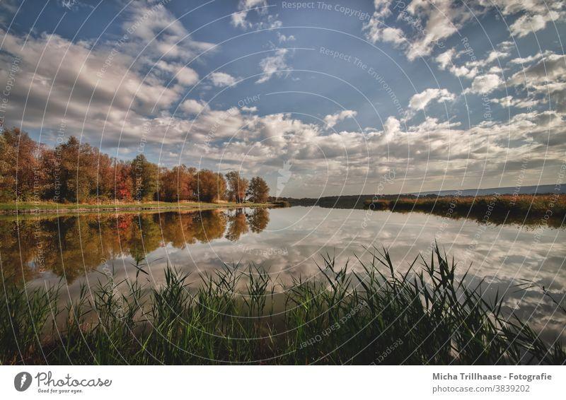 Herbst am See Dachwig Thüringen Wasser Himmel Wolken herbstlich Spiegelungen Reflexionen Bäume Ufer Herbstlaub Schilf Natur Landschaft Ruhe Idylle