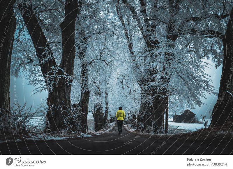 Vereiste Winterallee Allgäu Bayern Deutschland Europa Frost Kurfürstenalle Landschaft Natur Nebel Wald Winter 2020 schnee eingefroren gelb gelbe jacke