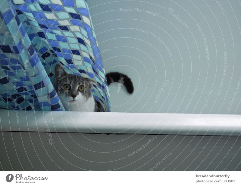 Badetag Badewanne Duschvorhang Tier Haustier Katze Tiergesicht Fell 1 beobachten warten niedlich blau Farbfoto Innenaufnahme