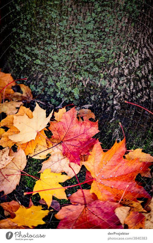 Nasse Blätter am Baum Niedersachsen Landschaft Sightseeing Pflanze Ausflug Wanderung Natur Herbst Schönes Wetter Umwelt wandern Wald Akzeptanz Vertrauen Glaube