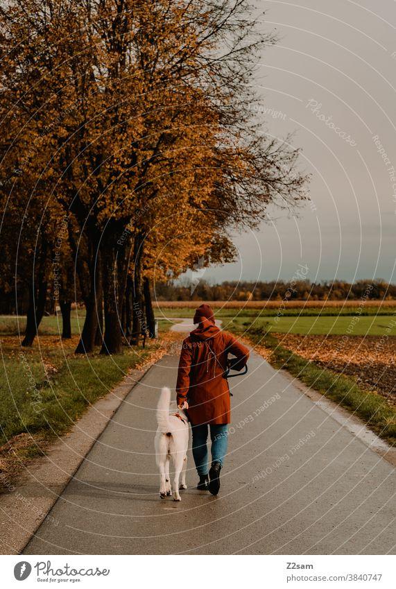 Junge Frau beim Gassi gehen mit weißem Schäferhund gassi gehen schäferhund spazieren zuneigung erziehung rot mütze herbst feld natur ländlich sitzen leine brav