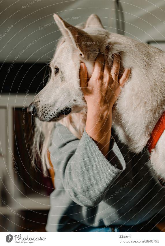 junge Frau spielt mit ihrem Hund Schäferhund weiß Zuneigung Liebe Haustier Kuscheln Streicheln Spielen Freundschaft Zusammensein Glück Farbfoto Tier niedlich