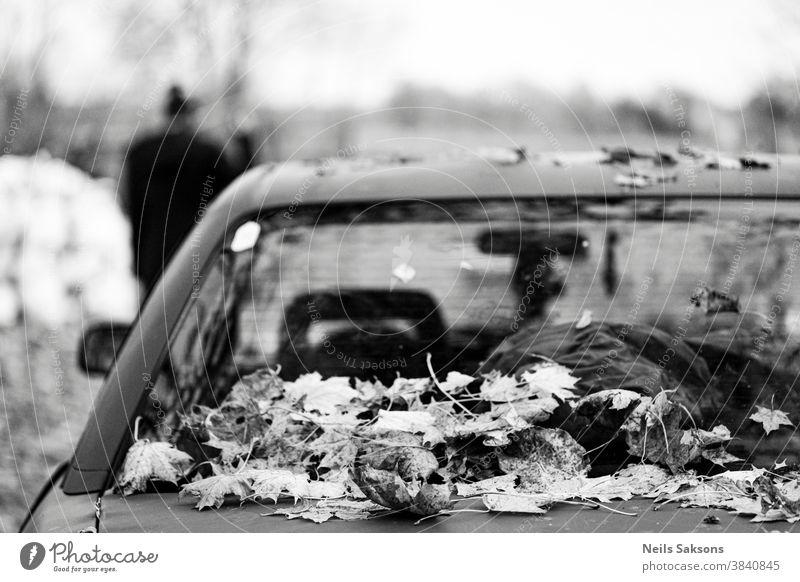 trockene Ahornherbstblätter auf dem Kofferraum eines am Straßenrand geparkten Autos Automobil Herbst herbstlich Hintergrund PKW kalt laubabwerfend Bäume