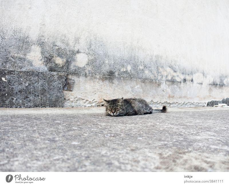 sehr müde, ziemlich alte Straßenkatze liegt vor Betonfassade und schläft Außenaufnahme Farbfoto Gedeckte Farben Katze Wildtier Müde Krank grau Fassade Wand