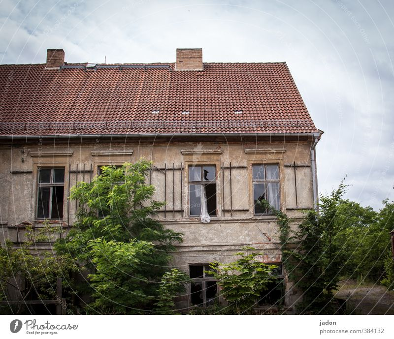 alles nur fassade | ganz natürlich Natur Pflanze Baum Haus Fenster Wand Gebäude Architektur Mauer Garten Fassade Wohnung Häusliches Leben Sträucher Wachstum verfallen
