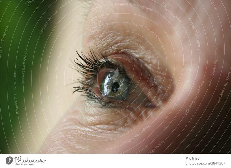 Ein Auge Frau Nahaufnahme Blick Wimpern Iris Regenbogenhaut Detailaufnahme Sinnesorgane kurzsichtig weitsichtig Sehvermögen Augenfarbe Makro Augenlid sehen