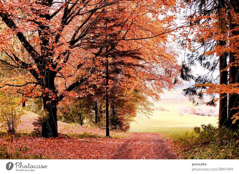 schau time Wald Herbstfarben Weg Waldrand Buche orange Landschaft Allgäu strahlend schauen Sonnenlicht Baum hell Blatt