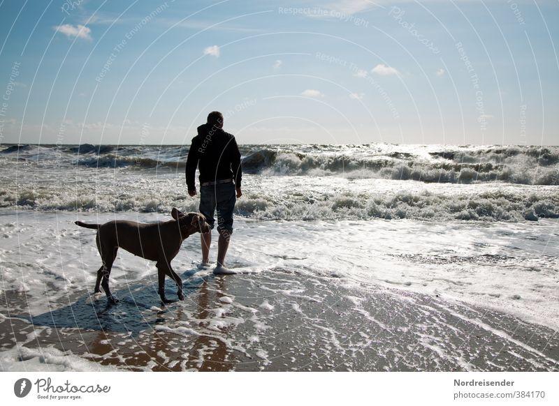 Brandung Hund Mensch Mann Ferien & Urlaub & Reisen Sommer Meer Erholung Freude Strand Erwachsene Ferne Leben Freiheit Wellen Freizeit & Hobby Wind