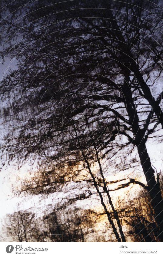 Wasserspiegelbild Baum Reflexion & Spiegelung Abend Teich