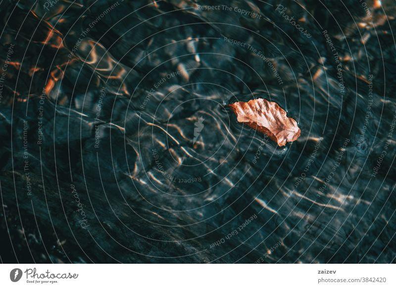 Detail eines braunen getrockneten Blattes, das auf der Wasseroberfläche schwimmt Oberfläche Licht Lichtreflexionen Wasserreflexionen Wellungen Wellen