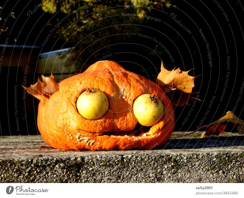 Herbstanfang... Kürbis Halloween Erntedankfest Gemüse Dekoration & Verzierung Blatt Gesicht Kunst Auge Obst Frucht Früchte saisonbedingt orange Tradition Birne