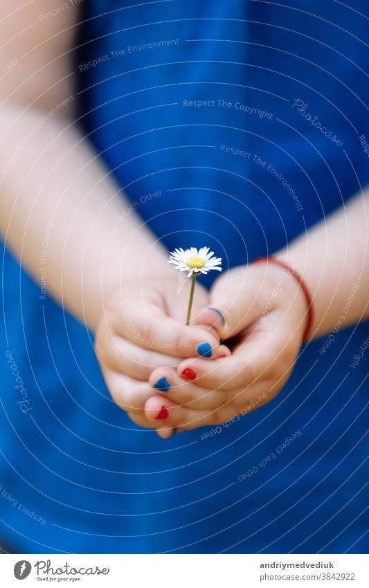 kleines Mädchen in blauer Bluse hält in einem Frühlingsgarten eine Kamillenblüte mit Maniküre in den Händen. selektiver Fokus. Glück niedlich Kind Garten Park