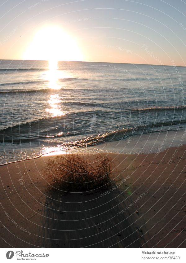 Sonnenschatten Sonnenaufgang Meer Strand Sträucher Einsamkeit Ferien & Urlaub & Reisen ruhig Licht Wellen Schatten leer Frieden blau