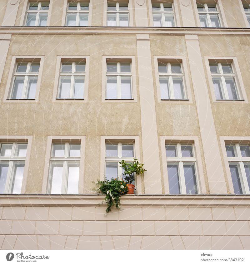 Seine Grünpflanzen auf dem Fenstersims durchbrachen die fast sterile Wirkung der Fensterfassade des renovierten Altbaus Fassade individuell auffallen wohnen