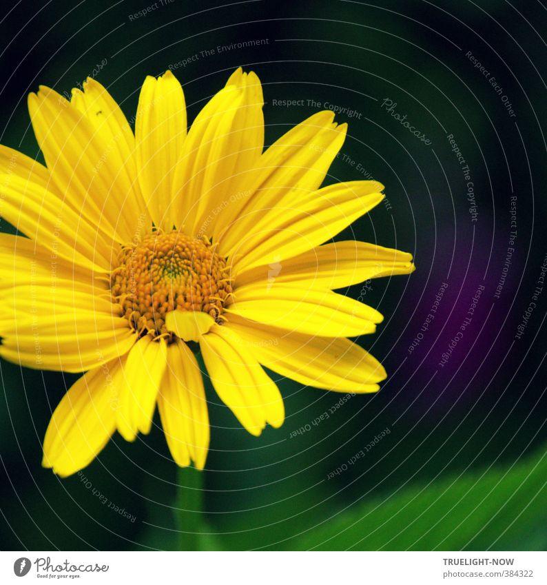 Freude Natur schön grün Pflanze Sommer Sonne Blume gelb Liebe Blüte Glück Gesundheit Garten träumen Park leuchten