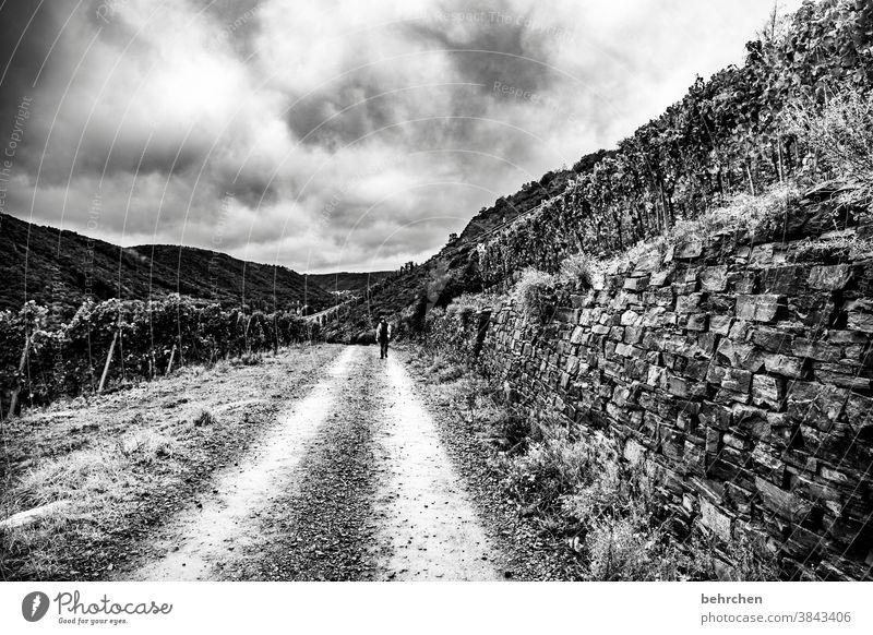 wenn der weg das ziel ist Wege & Pfade beeindruckend ausblick Aussicht dunkel wandern Wald Ferien & Urlaub & Reisen Schwarzweißfoto dramatisch Natur