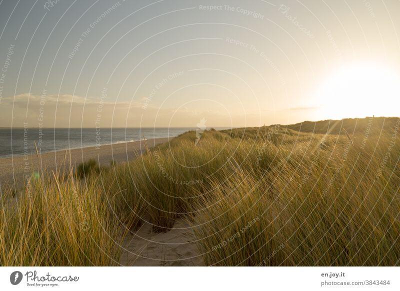 Morgens in den Dünen am menschenleeren Strand Meer Sonne Sylt Ellenbogen Sonnenaufgang Sonnenschein Gegenlicht Gras Ferien & Urlaub & Reisen Himmel Landschaft