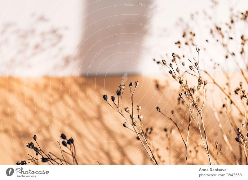 Dekor aus trockenen Blumen oder Zweigen Trockenblumen Requisiten Wohnkultur Vorbau geblümt Ordnung Blumenstrauß Winter Gras Pflanze getrocknet Design natürlich