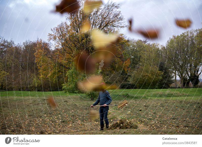 Gartenarbeit im Herbst wenn die Blätter fliegen Mann laub Wiese Gras Natur Flora Pflanzen Vegetation Wandel& Veränderung Bäume Laubbäume Laub rechen Himmel Grün