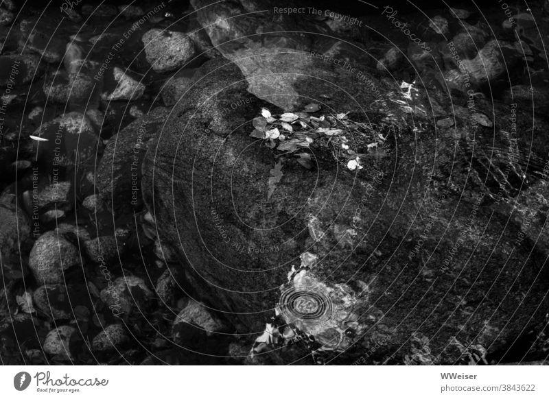 Ein großer Stein, alte Blätter und viele Spiegelungen im Wasser Mulde Blütenblätter Bälätter welk abgefallen Oberfläche Grund Reflexionen Herbst Vergänglichkeit