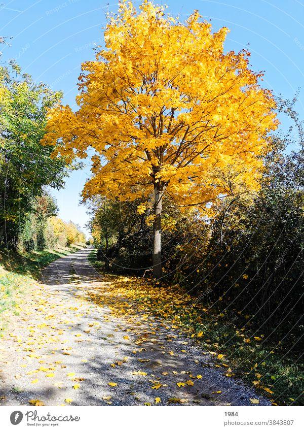 Herbst #herbst gelb autumn Natur Wege & Pfade Baum Bwum Farbfoto Menschenleer Landschaft Außenaufnahme herbstlich Umwelt Herbstfärbung Herbstbeginn Herbstlaub