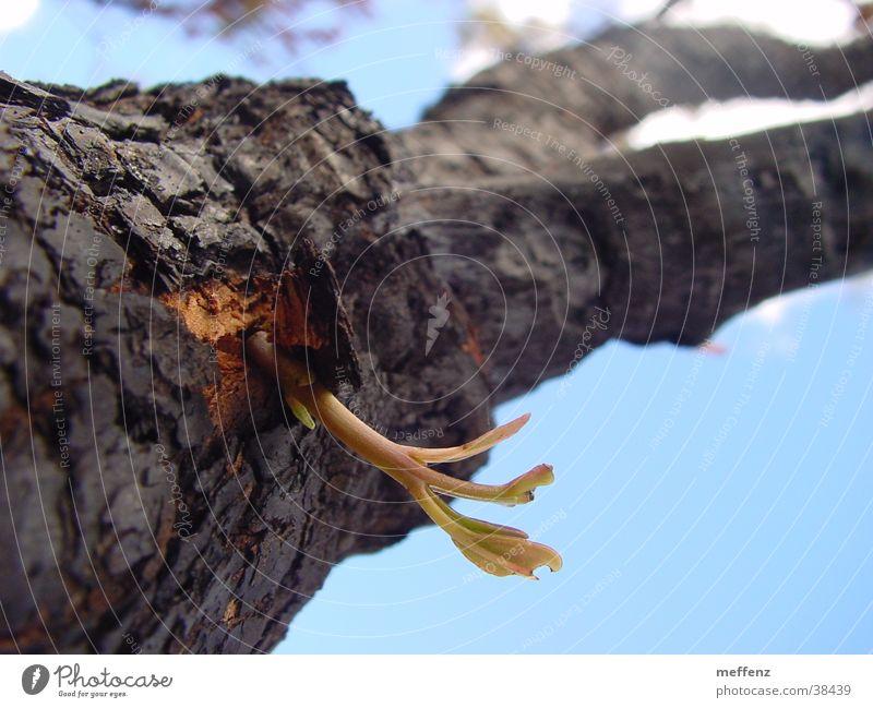 nature rules Baum Durchbruch Beginn Erneuerung Trieb Jungpflanze Erfolg Brand