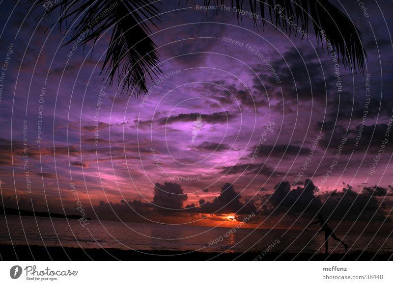 steinwurf Sonne Meer Strand Wolken Palme Sonnenuntergang werfen