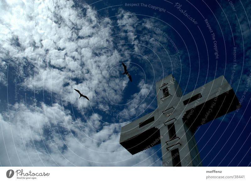 cross flight Religion & Glaube Rücken Kruzifix Christliches Kreuz Gotteshäuser Christentum Schwalben