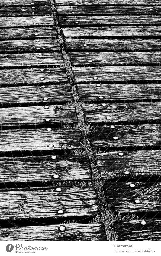 Holzsteg mit gewissen Alterungsspuren Steg alt Moos Linien Metall Nieten Menschenleer Schwarzweißfoto Außenaufnahme morsch