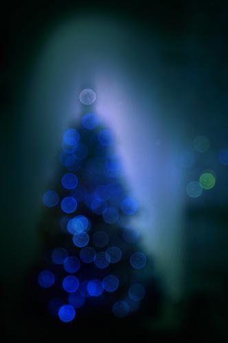 Unser Weihnachtsbaum auf dem Markt steht schon! Weihnachtsbaumschmuck Lichter unscharf verschwommen Unschärfe Bokeh Weihnachten Weihnachten & Advent dunkel