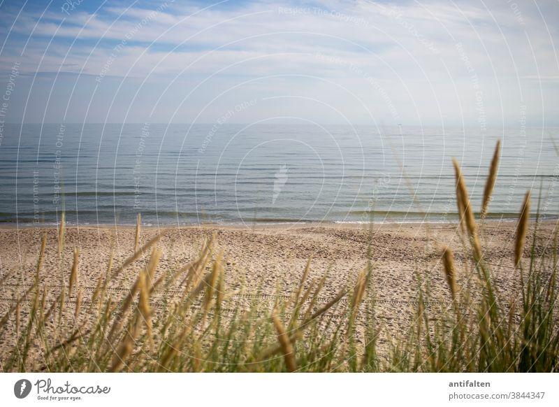Wie gemalt Strand Rügen Ostsee Schilfrohr Meer Himmel Sand Sandstrand ruhen Ruhe Horizont Ferien & Urlaub & Reisen Küste Ferne Mecklenburg-Vorpommern
