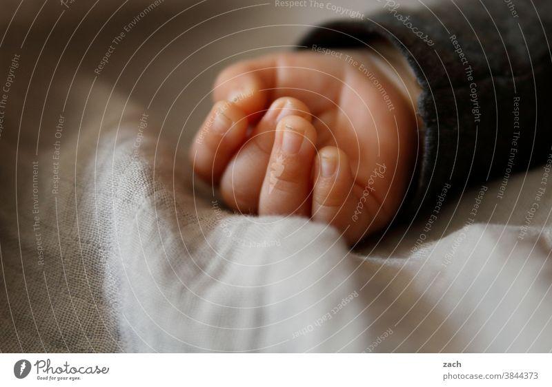 Das Licht dieser Welt Baby Kind Hand Kleinkind Finger klein Nahaufnahme 0-12 Monate Detailaufnahme säugling