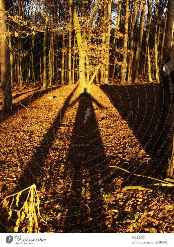 Schattenmann_1 Wald Baum Lichtspiel Schattenspiel Waldlichtung