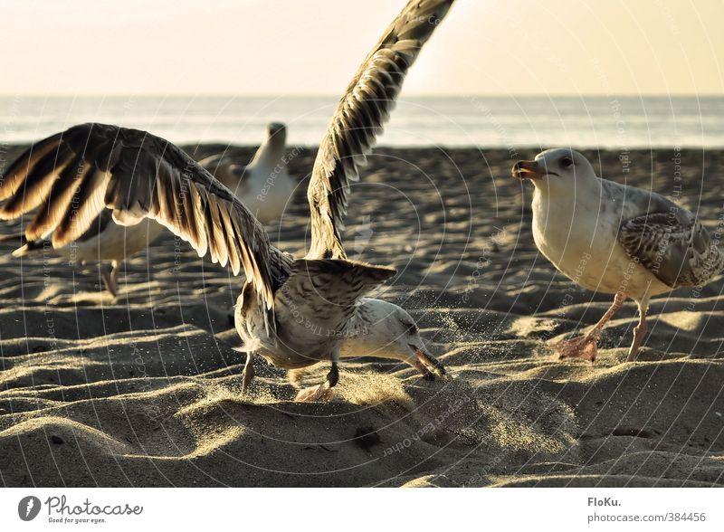 MEINS! Umwelt Natur Tier Sand Wasser Sonnenaufgang Sonnenuntergang Sonnenlicht Sommer Schönes Wetter Küste Strand Wildtier Vogel Tiergruppe Fressen füttern