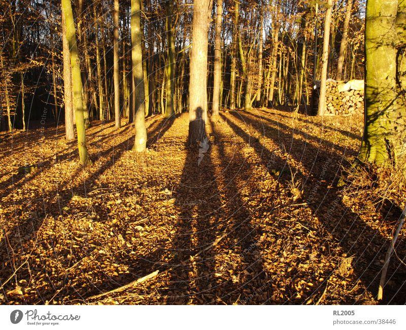 Schattenmann Wald Waldlichtung Schattenspiel Baum Bodenbelag