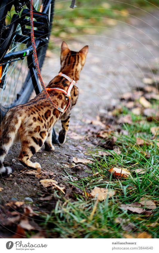 Katze macht Ausflug Blätter Haustier Gassi gehen warten aufgeregt Wachsamkeit entdecken Jagd geheimnisvoll Idylle Farbfoto Tierliebe selbstbewußt weich Neugier