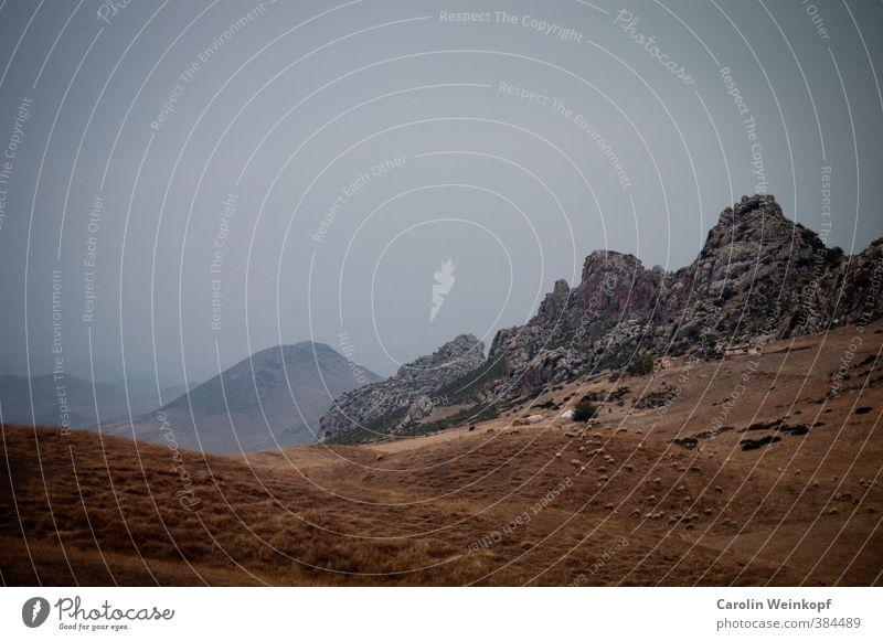 Ins Blaue. Natur Landschaft Pflanze Erde Sand Himmel Wolkenloser Himmel Sommer Klima Klimawandel Wärme Wiese Felsen Berge u. Gebirge Wüste Ifrane Marokko Afrika
