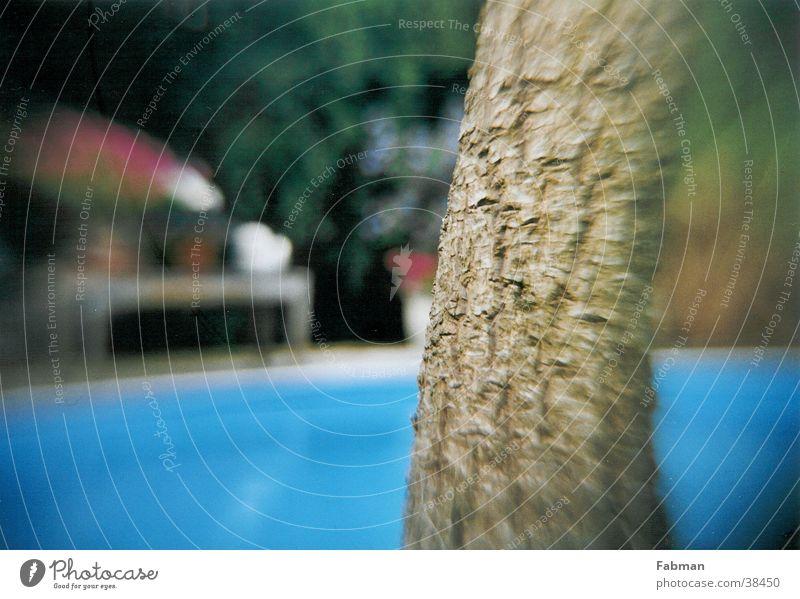 Palme vor Pool Schwimmbad Sommer Ferien & Urlaub & Reisen Erholung Europa Insel