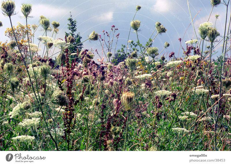 Wildwuchs Natur Pflanze Farbe authentisch natürlich Wildtier Lebensraum