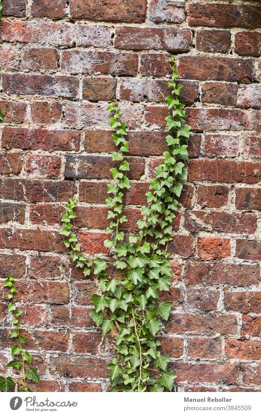 Pflanzen an der Wand Garten grün Natur Hintergrund Design natürlich Blatt Baum Dekoration & Verzierung frisch Frühling Textur Laubwerk schön Sommer Park Muster