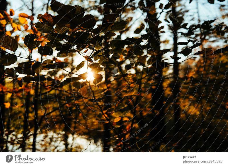 Herbstlicht Blatt Baum Natur Sonne Außenaufnahme Sonnenlicht Wald Umwelt Landschaft Sonnenstrahlen warm