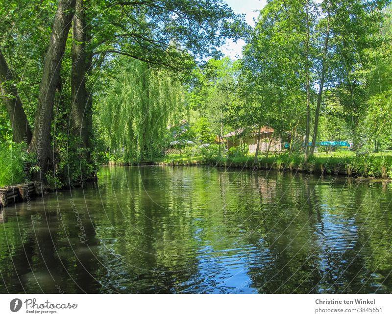 Kanu fahren im Spreewald an einem sonnigen Tag im Mai Wasser Maigrün Reflexion & Spiegelung blau Sonnenlicht verzaubert friedlich ruhig idyllisch Deutschland